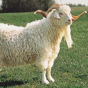 Шерсть ангорской козы